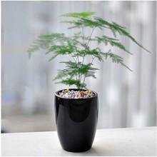 御春阁 四季常绿 室内鲜花绿植小盆栽 鲜花绿植