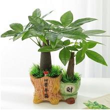 发财树文 四季平安 室内书房办公室桌面盆景绿植水培植物 鲜花绿植
