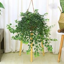 绿韵花田 常春藤 办公室桌面室内阳台垂吊绿植  鲜花绿植